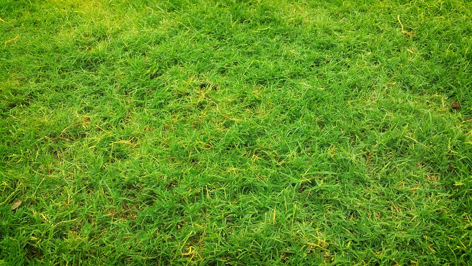 Comment poser un gazon en rouleau sur votre terrain, jardin ou terrasse
