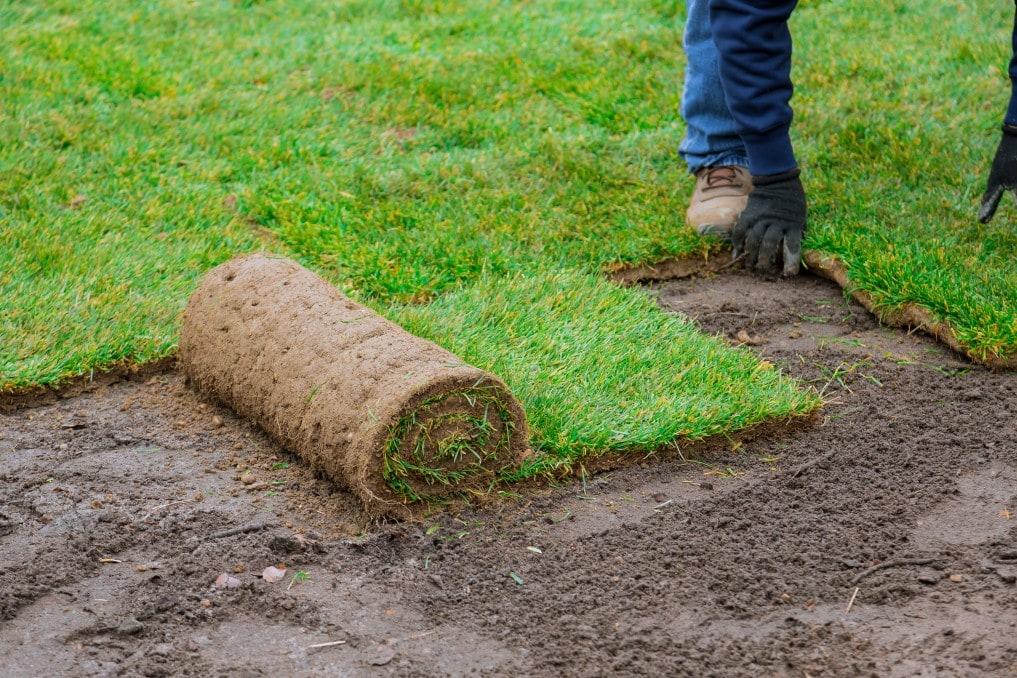 Comment poser du gazon : Préparez la cour et installez la nouvelle pelouse