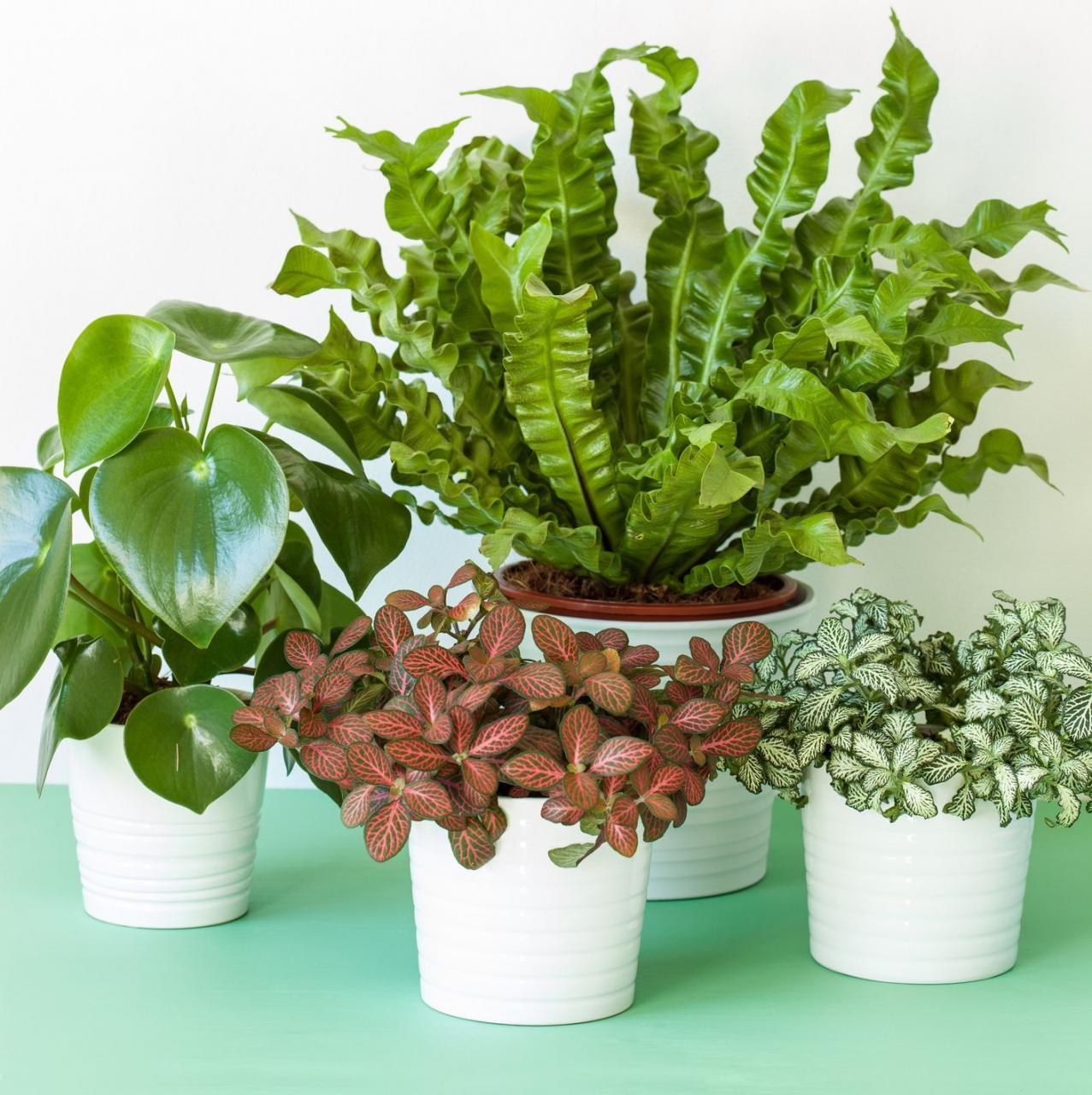 Meilleures plantes d'intérieur faciles à cultiver à faible soleil